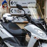 Is een scooterverzekering verplicht?